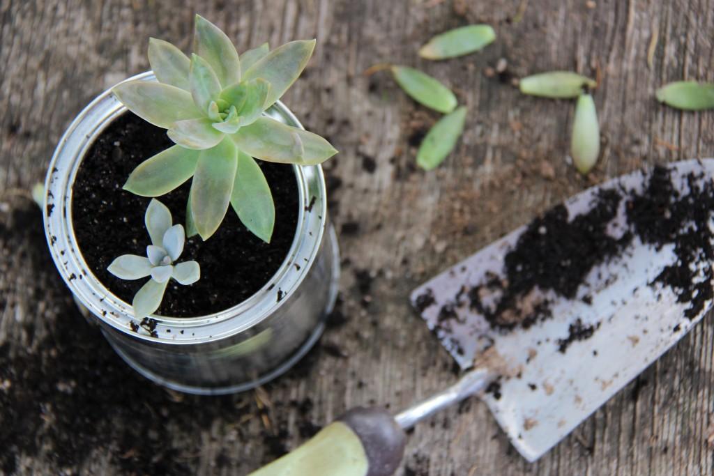 Tips for Growing Succulents   Hello Bubblegum